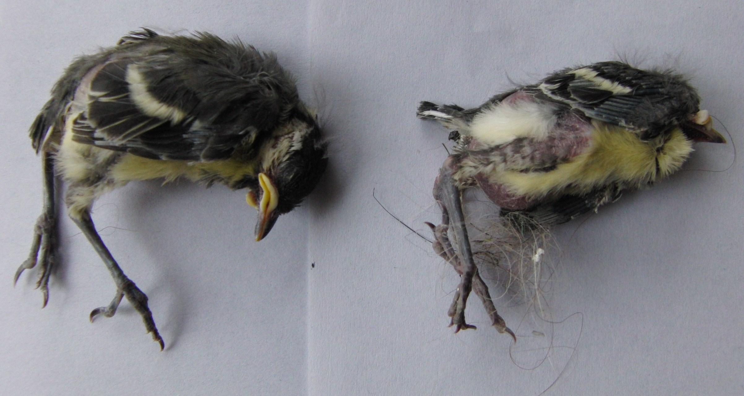 Stikstof nekt vogels op de Veluwe